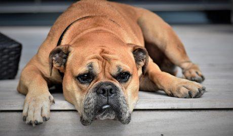 Zadbaj o zdrowie swojego psa